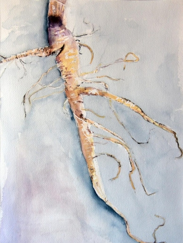 Kale Root, watercolor