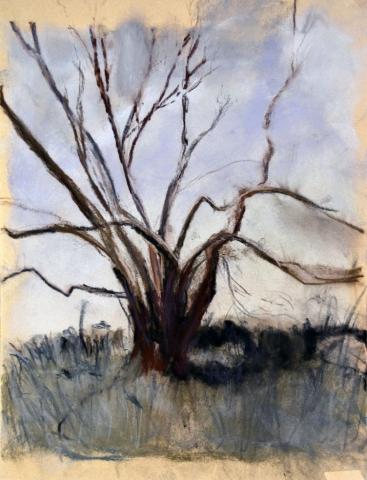 Tree Study, pastel